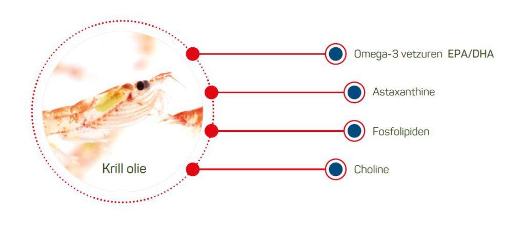 grafiek krill olie