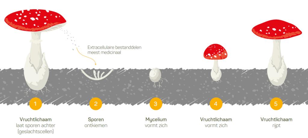 Onze paddenstoelen in de kijker